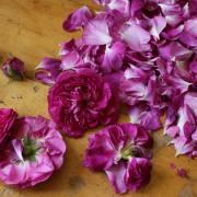 Blüte und Frucht