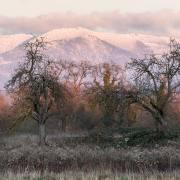 Anton Döbele: Winterabend im Rieselfeld
