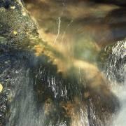 Dusan Minarik: Wasser 1