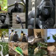 Ein Tag im Basler Zoo
