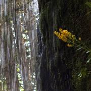 Moni Am Wasserfall