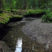 Moni Wassergeist im Zauberwald
