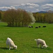 Armin Burger: Ostern im Mundenhof