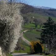 Monika Schäfer: Frühling im Obereggener Tal