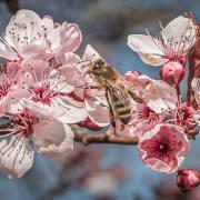 Gerhard Strube: Frühling zu Hause