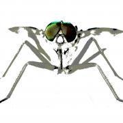 Joachim Kuhni: Insektengrafik