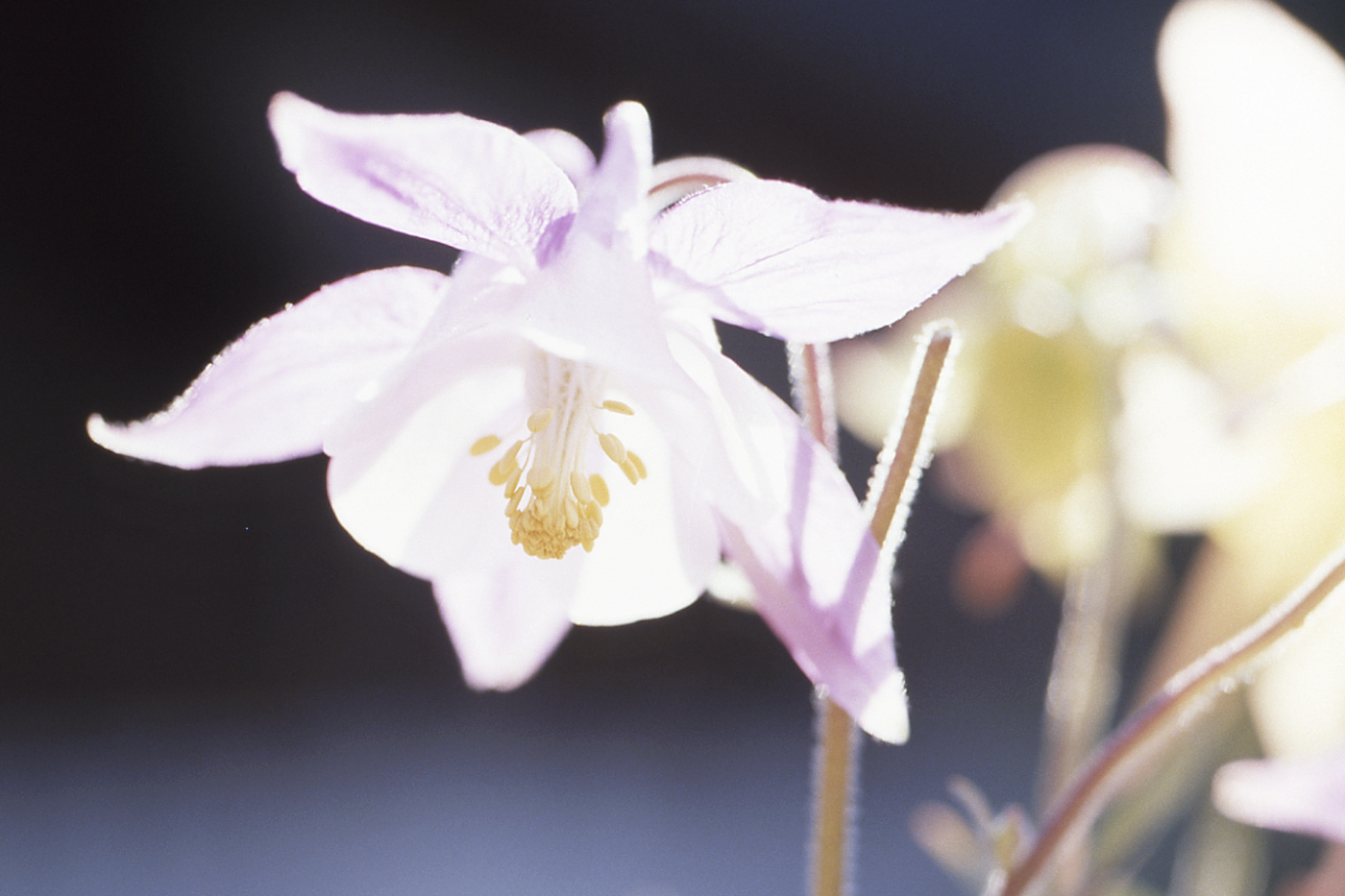 Dusan Minarik: Blüten mal anders 1